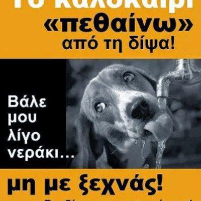 """Φιλοζωικό Σωματείο Προστασίας Αδέσποτων Ζώων Πτολεμαΐδας: """"Βάζουμε ένα μπολ με νερό έξω από τα σπίτια μας για τα αδέσποτα"""""""