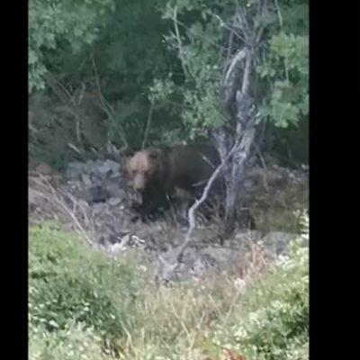 "kozan.gr: Ένας ""απρόσμενος επισκέπτης"" κοντά στην Ιερά Μονή Αγίας Τριάδος Βυθού του Δήμου Βοΐου (Βίντεο)"