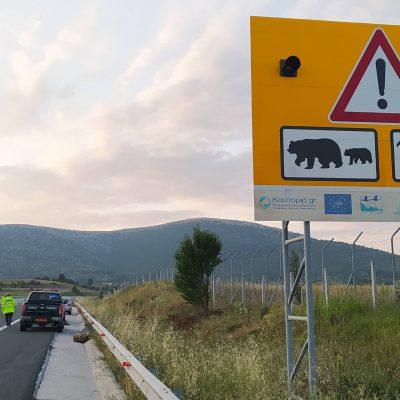 Τροχαίο με θύμα νεαρή ενήλικη αρκούδα συνέβη τις πρώτες πρωινές ώρες στον κάθετο άξονα Σιάτιστας – Κρυσταλοπηγής της Εγνατίας Οδού στο ύψος του οικισμού Καλονερίου (Φωτογραφία)