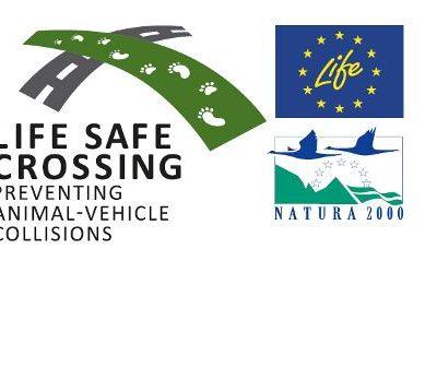 To έργο LIFE SAFE CROSSING θα λάβει επιπλέον μέτρα μετά από τροχαίο με αρκούδα στον κάθετο άξονα Σιάτιστα – Κρυσταλλοπηγή