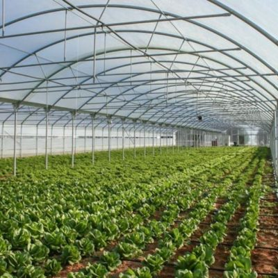Πτολεμαΐδα: Θερμοκήπια και λαχανόκηποι στο 1ο ΕΠΑΛ
