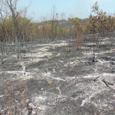 Μαίνεται η πυρκαγιά στο Καρπερό του Δήμου Δεσκάτης, κοντά στα όρια με τον Δήμο Γρεβενών – Στο σημείο της φωτιάς ο Δήμαρχος Γρεβενών Γιώργος Δασταμάνης ( Φωτογραφίες)