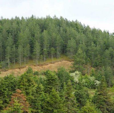 Διαχείριση δασών  (γράφει ο Στέφανος Βαβλιάρας)