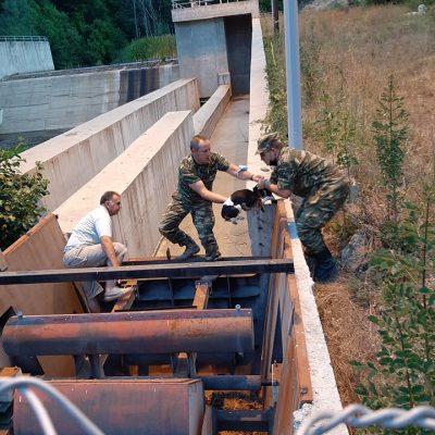Φλώρινα: Απεγκλωβισμός δύο σκυλιών στο φράγμα Τριανταφυλλιάς  (Φωτογραφίες)