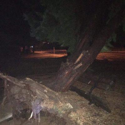 kozan.gr: Σέρβια: Οι δυνατοί άνεμοι ξερίζωσαν δέντρο, πριν την διασταύρωση των Σερβίων – Το παγκάκι και τα καλώδια του ΔΕΔΔΗΕ συγκρατούν το δέντρο (Φωτογραφία)