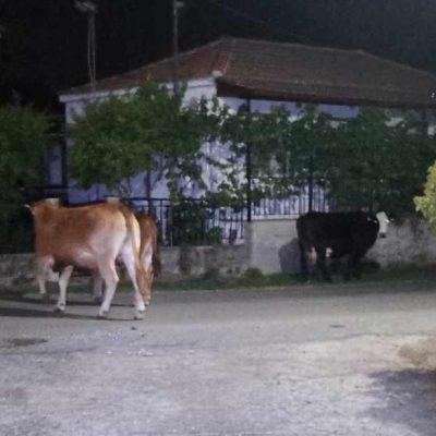 Δήμος Κοζάνης: Άμεση ανάγκη για συλλογή ζωοτροφών