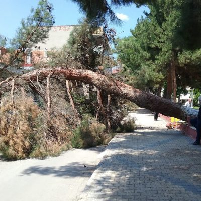 kozan.gr: Πτολεμαίδα: Έπεσε δέντρο στο πάρκο Χρηστίδη ευτυχώς χωρίς να τραυματιστεί κανείς (Φωτογραφία)
