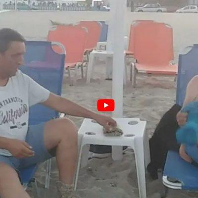 ΚΕΔΡΟΣ TV:  Με τον υδράργυρο να ξανανεβαίνει στα ύψη, αρκετοί κτηνοτρόφοι, απέδρασαν σε κοντινές παραλίες με το ΚΑΠΗ (Βίντεο)