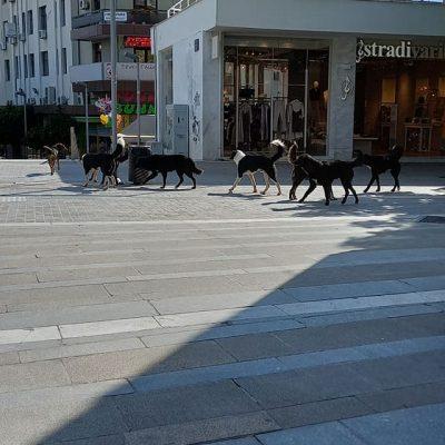 """Σχόλιο αναγνώστη στο kozan.gr: Η """"συμμορία"""" των 12 στο κέντρο της Κοζάνης (Φωτογραφίες)"""