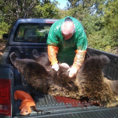 Νεκρή αρκούδα από πυροβολισμό στην Πρέσπα (Φωτογραφίες)