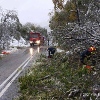 kozan.gr: Πτώσεις δέντρων,  νωρίς το πρωί, λόγω κακοκαιρίας και στο δρόμο Φλώρινας – Πρέσπες, πριν το Πισοδέρι – Διεκόπη η κυκλοφορία